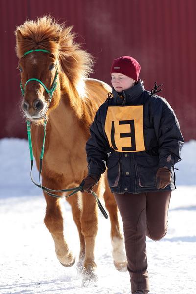 Hevostarkastus: juoksutus