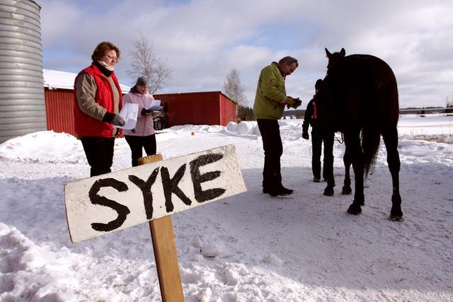 Hevostarkastus -piste