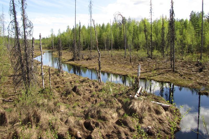 Talaskangas keväällä 2012 | Iisalmen Latu ry