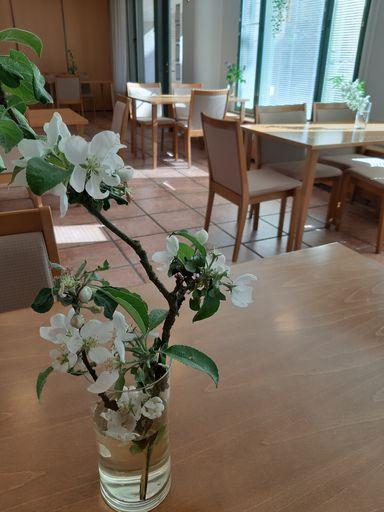 Yksityiskohta lounasravintolasta, omenapuun oksa