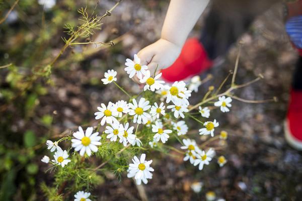 Lapsi pomii kukkia.