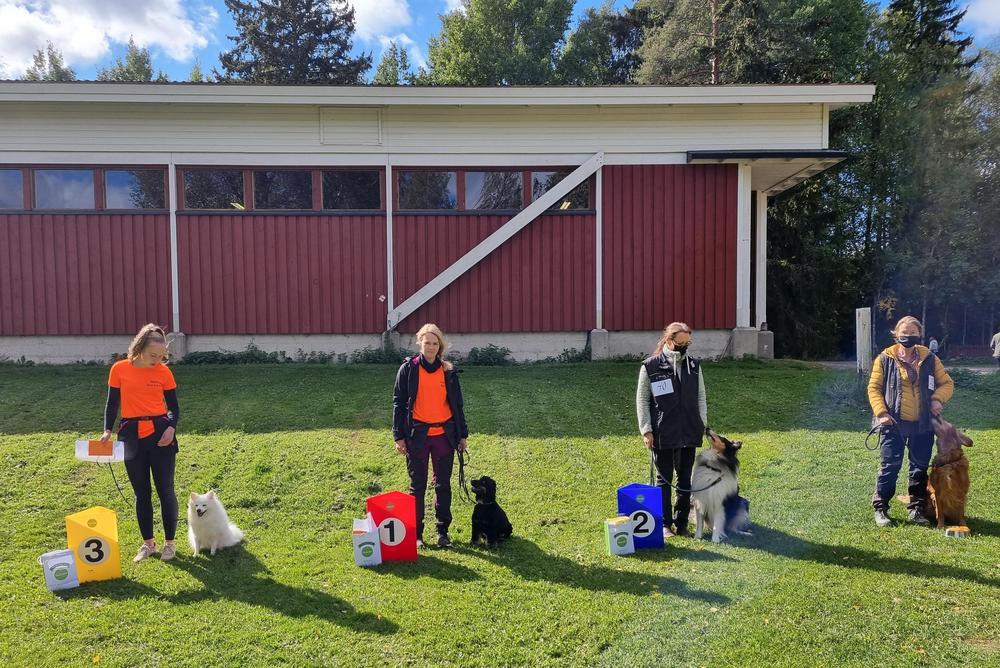 VOI-luokan palkitut koirakot.