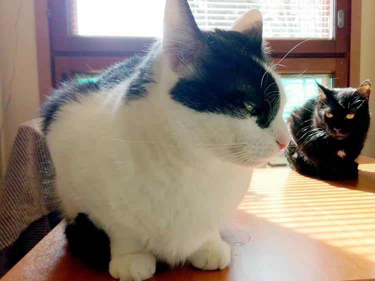 Kissakahvilan kissat.