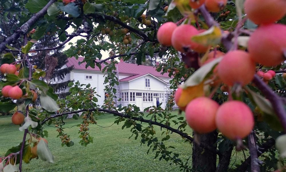 The residential building (i.e. main building) behind the apples holds seven rooms and a loft covering the entire building.