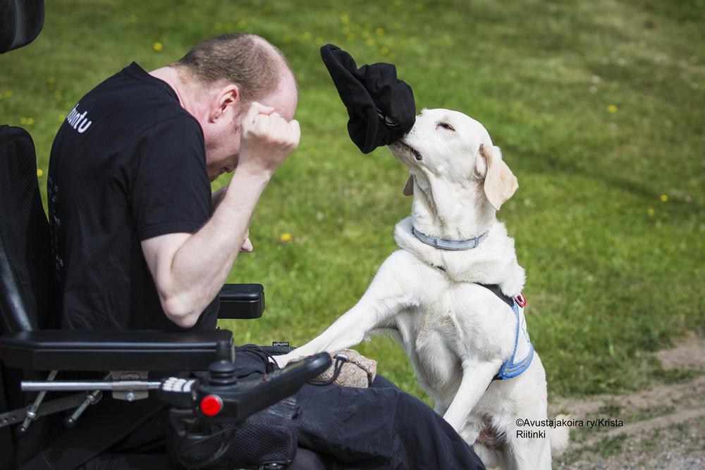 Kuvassa mies istuu sähköpyörätuolissa. Vaalea labradorinnoutaja ottaa mieheltä hatun päästä.