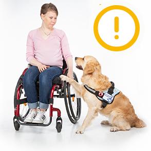 Nainen istuu pyörätuolissa. Hänen vierellään on kultainennoutaja joka on avustajakoira. Koira ojentaa etutassuansa kohti naista.