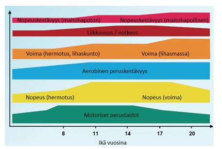 Fyysisten ominaisuuksien herkkyyskaudet ja painopistealueet eri ikävaiheissa.  Hakkarainen H. ym. 2008. Lähde: www.terveurheilija.fi.