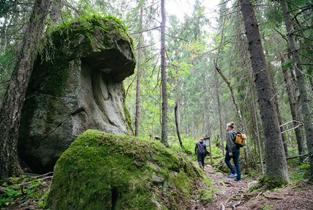 Liikkujia metsässä.