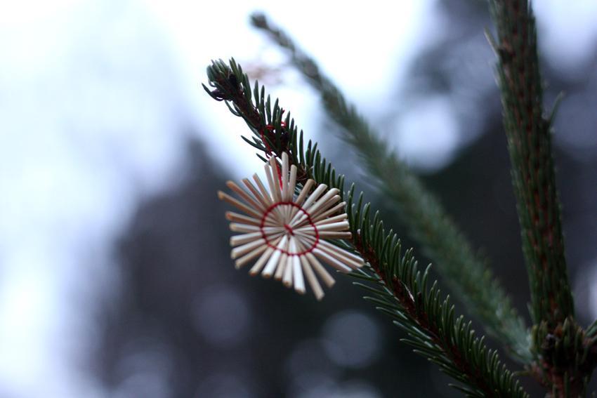 Kuva joulukuusessa olevasta oljesta tehdystä tähtikoristeesta