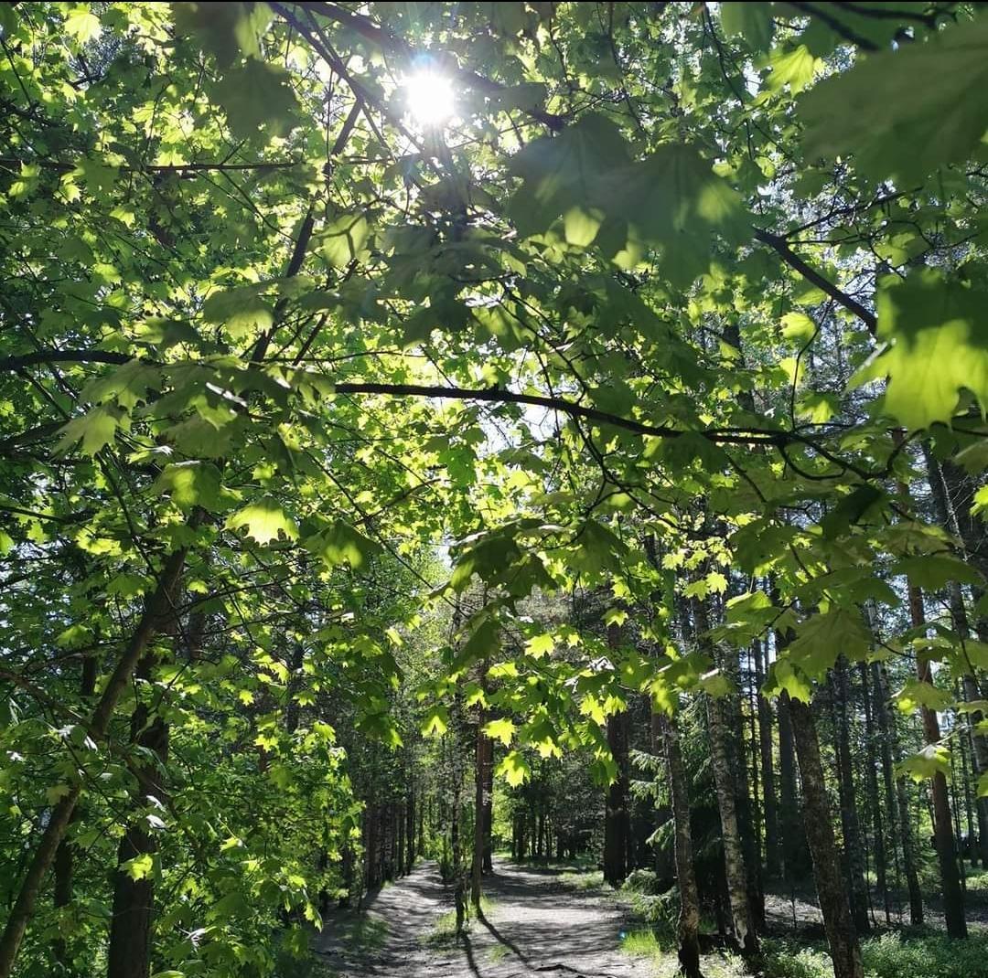 Polku Kouvolassa, aurinko paistaa puiden välistä. Paikkaba Somerontien ja Enoharjuntien risteys - Sydänmaantie.
