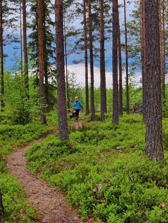 Virolahdella, Virojoen Elokallion metsässä tyttö ja koira kävelevät polkua pitkin.