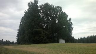 Työväentaloa ympäröi tiheä puusto.