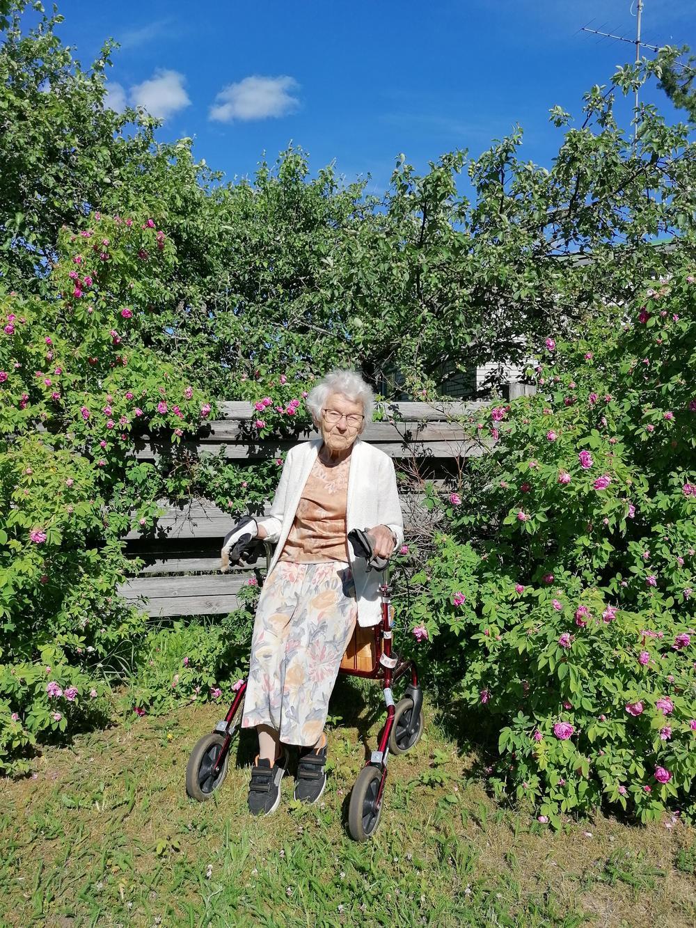 Liisa istumassa rollaattorin päällä ruusupensaan vieressä.