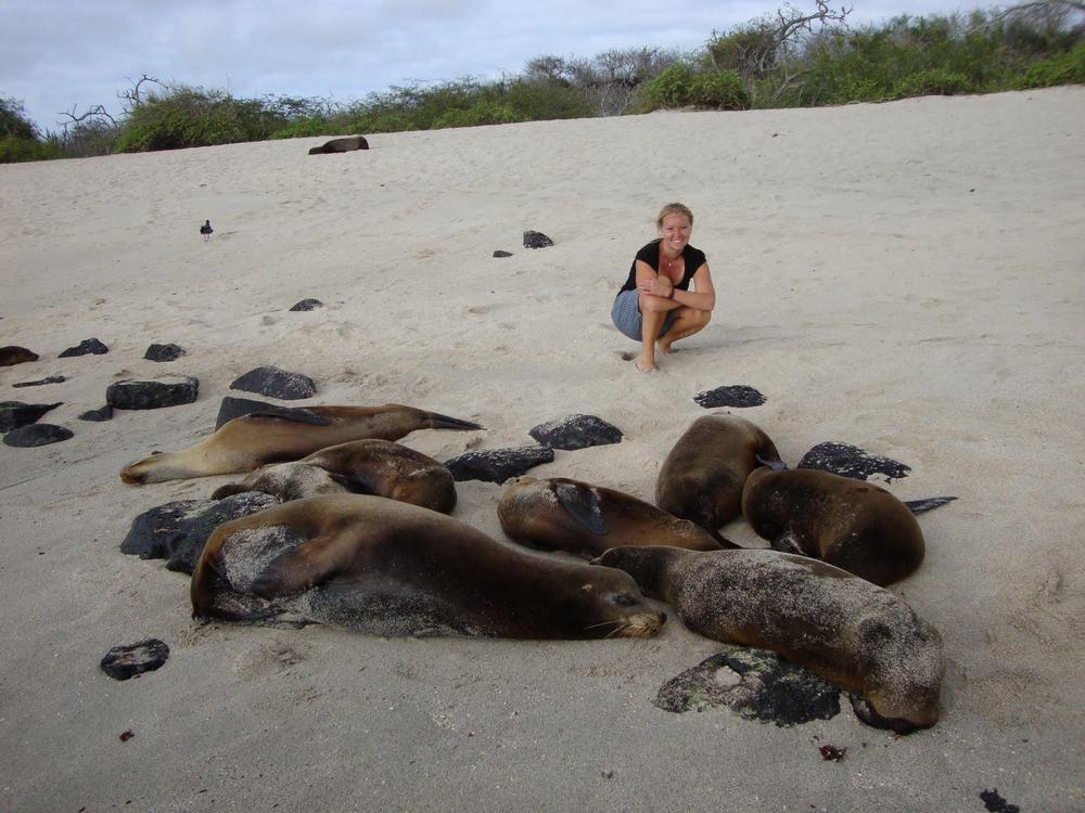 Nuori nainen kyykyssä hiekka rannalla. Kuvassa etualalla joukko merileijonia.