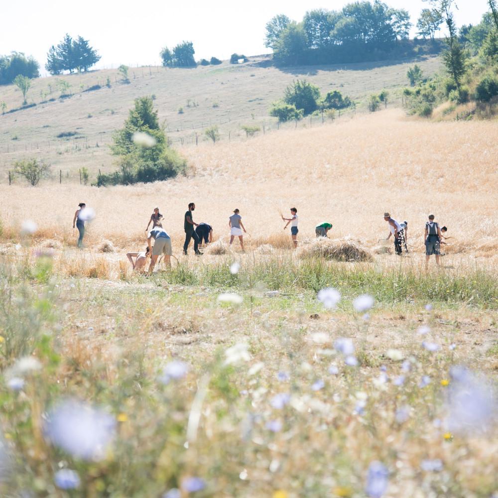 Vapaaehtoisleirillä Italiassa, vapaaehtoisia töissä pellolla.