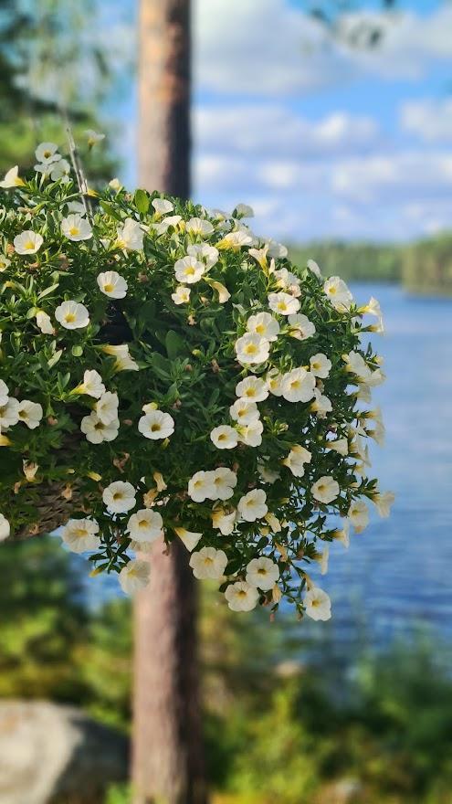 Kuva: Kukkia parvekkeella
